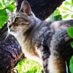 Susanne Profile Picture