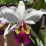 Orchid Species Lovers Profile Picture