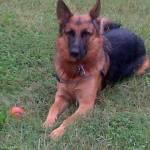 starrlass Profile Picture