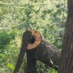 Ceceneylon Profile Picture