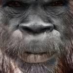 Deano Burke Profile Picture