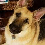 Lauren Stephan Profile Picture