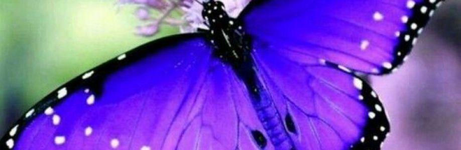 Donna Grabinski Cover Image