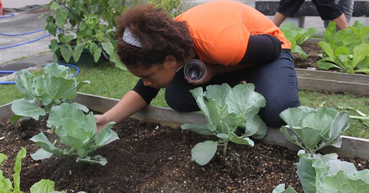 School Gardens Help to Prevent Nutritional Deficiencies, Study Shows