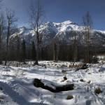 AlaskaHomestead Profile Picture