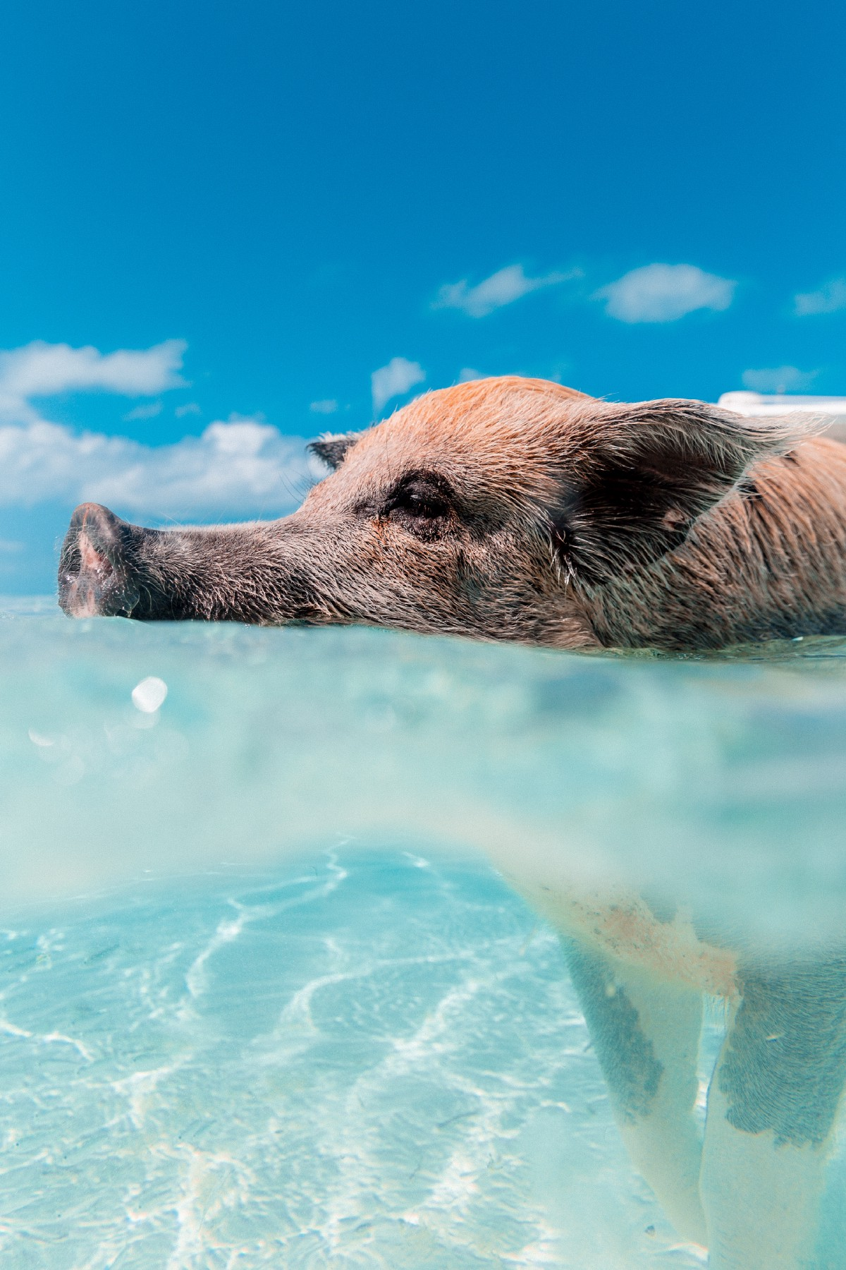 What Methodists Can Learn from Suicidal Pigs – Solus Jesus – Medium