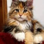 anna gentileschi Profile Picture