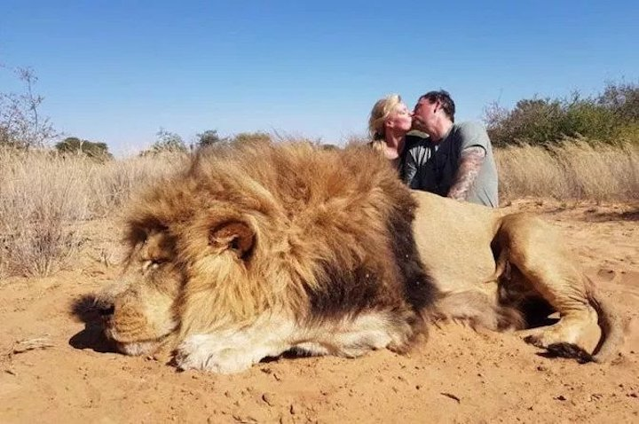 Puppy Snuff Films + Farm Raised Lions for Thrill Kills! | True Conservative Pundit