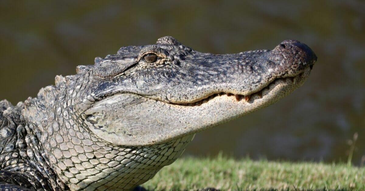 Police Issue Ominous Warning To Avoid Creating 'Meth-Gators'
