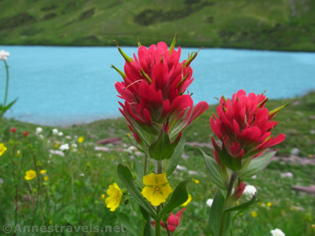 The Beautiful Water & Wildflowers of Cracker Lake - Anne's Travels