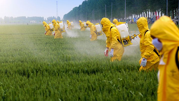 You are not gluten intolerant, you are glyphosate intolerant
