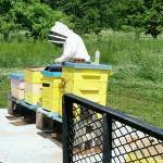 Beekeepers Profile Picture