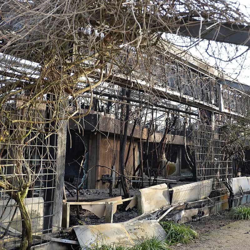 Kein Geld zum Schutz des Affenhauses – aber monatlich 42.000 Euro für Migranten-Sicherheitsdienst: Die toten Tiere von Krefeld klagen an! – Deutschland Kurier