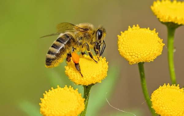 Don't Let Bees and Wasps Ruin Your Hikes Outdoors