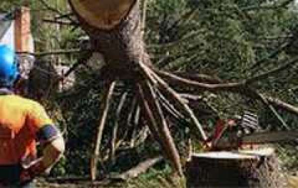 Arborist Services - Benefits of Hiring and some Queries during Hiring
