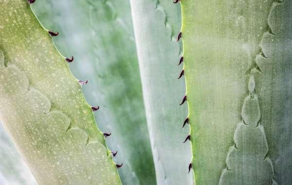 Surprising Benefits of Aloe