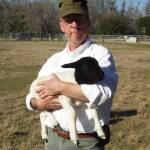 Homestead  Poultry and Livestock Profile Picture