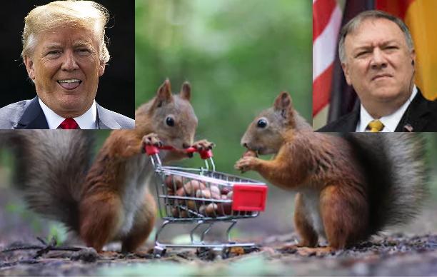 Globalist Squirrels Looking For American Nuts - Setting Brushfires