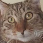 Michael Jahn Profile Picture