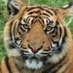 Ron Fillmore Profile Picture