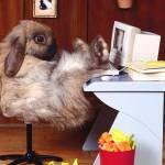 Conejo Profile Picture