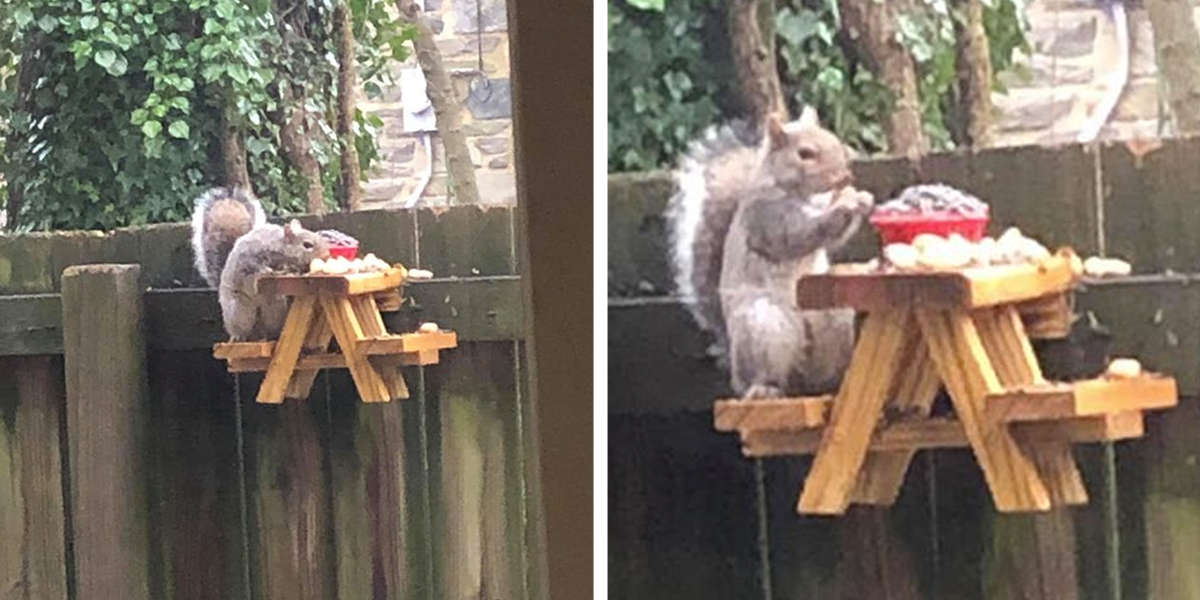 Guy Builds An Adorably Tiny Picnic Table For Squirrels In His Yard - The Dodo
