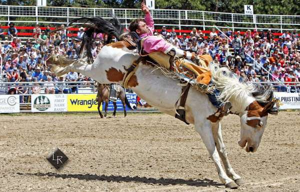 First time since WWII the rodeo has not occurred | TheFencePost.com