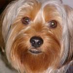 Liz Lemus Profile Picture