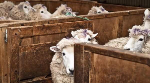 Fear : A Great Motivator Helps Keep Sheeple Under Wraps - The Washington Standard