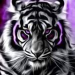 Paula Smith Profile Picture