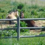 Bagley Farm's Profile Picture