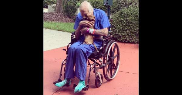 86-Year-Old Navy Veteran Who Suffered Stroke Has Life Saved by Tiny Chihuahua Mix