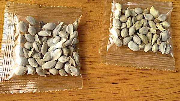 Chinese seeds may have been 'another attack' on U.S.