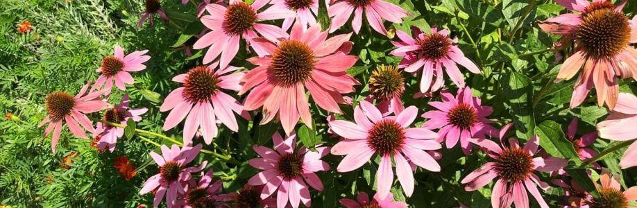 Semo gardening Cover Image