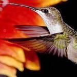 Hummingbird Watchers Profile Picture