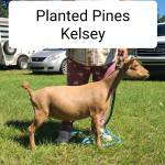 PlantedPines Profile Picture