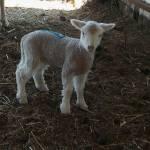Wall Sheep Farm profile picture