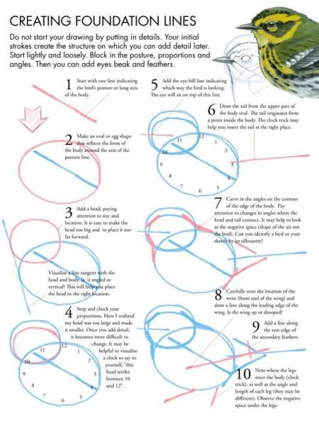 Drawing Birds Tutorial • John Muir Laws