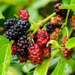 The Top Ten Natural Sources of Resveratrol – GinnyBrant.com