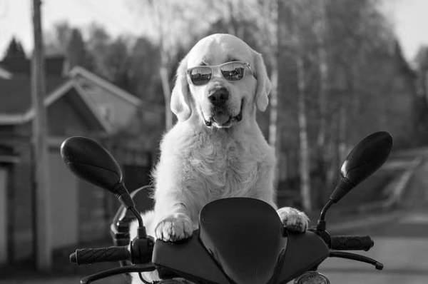 150+ Trendy Ideas for Hipster Girl Dog Names 2020 – DNI