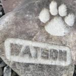 Eddie Watson Profile Picture