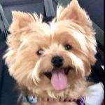 Patricia WestO Profile Picture