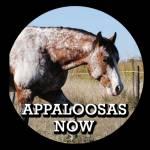 Appaloosas Now Magazine Profile Picture