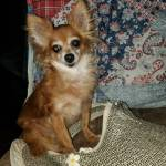 Judy finch Profile Picture