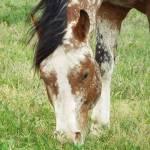 Dottie Ramsey Profile Picture