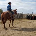 Ranch an Rope Horses for sale Profile Picture