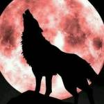 ItsTheWolf Profile Picture