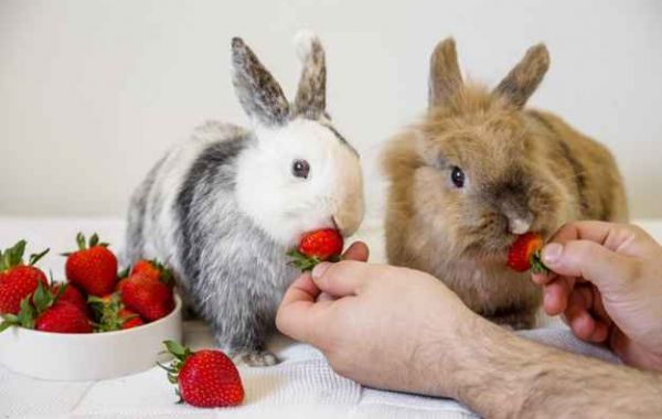 Herbs you should not feed your rabbit