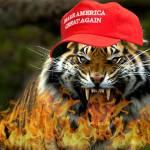 Federalist Tiger Profile Picture