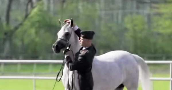 Showcase video for Pepita, Best In Show for the 2014 Polish Nationals